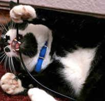 Как защитить провода от кошки