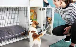 Как сделать ограждение для собаки в квартире?